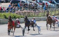 Image for Amman Valley Trotting Club